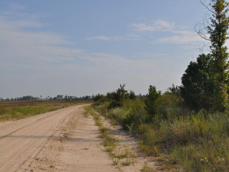 352 Ac Fm 2262 : Groveton : Trinity County : Texas