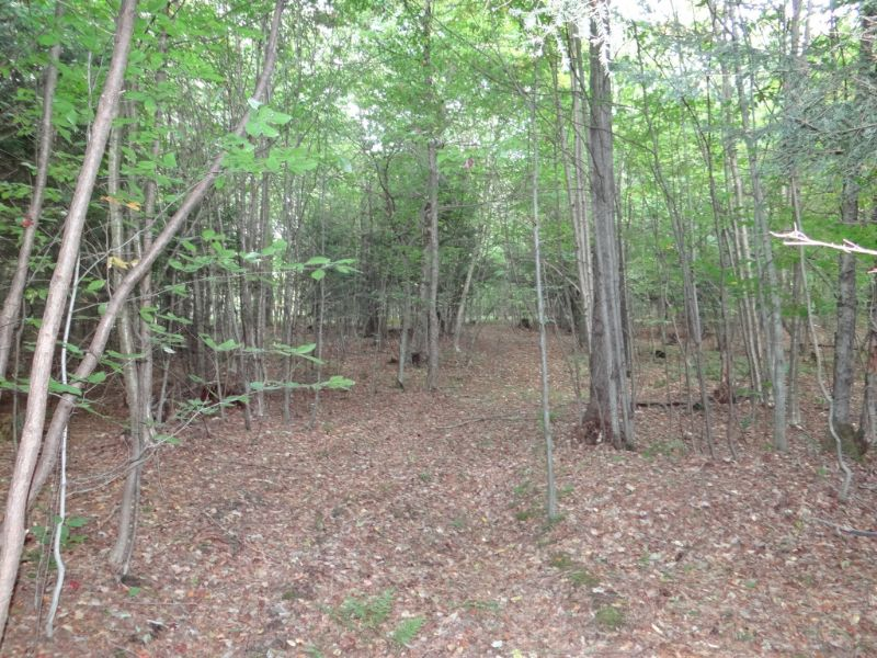 New York Hunting Land State Forest : Pharsalia : Chenango County : New York