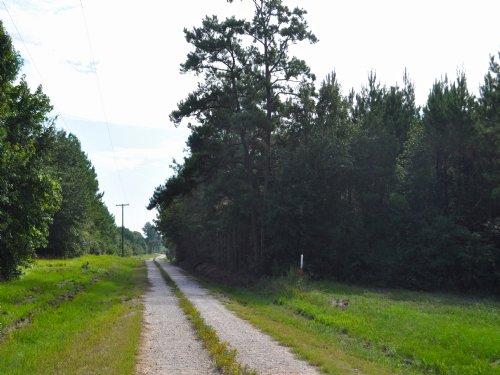 10 Ac Peter Wilkins Road : Corrigan : Polk County : Texas