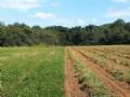 850 Acre Neals Creek Farm