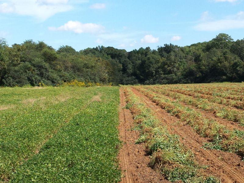 850 Acre Neals Creek Farm : Edison : Calhoun County : Georgia