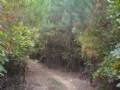 64+ Acres W/riding Trails