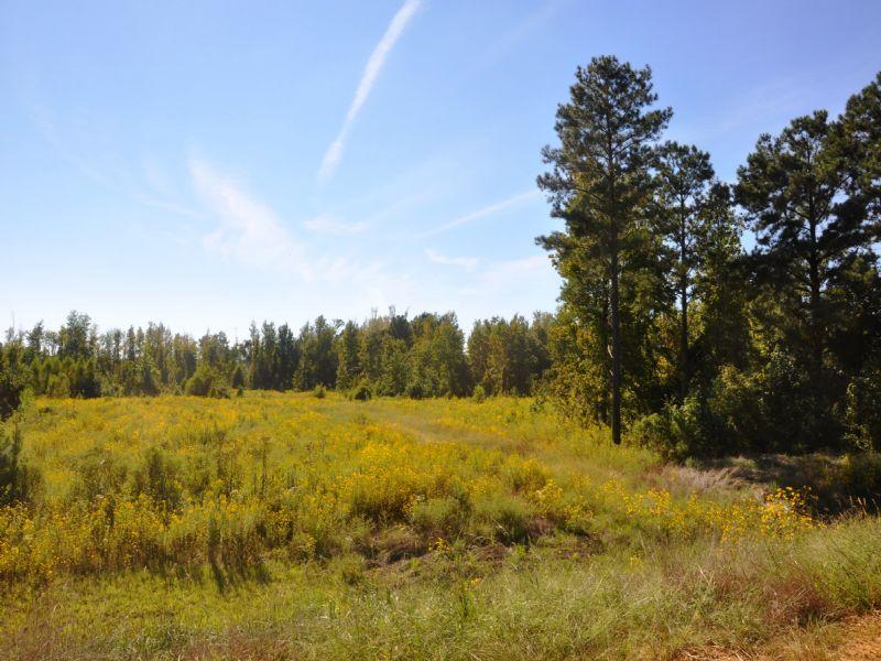592 Acres : Eupora : Webster County : Mississippi