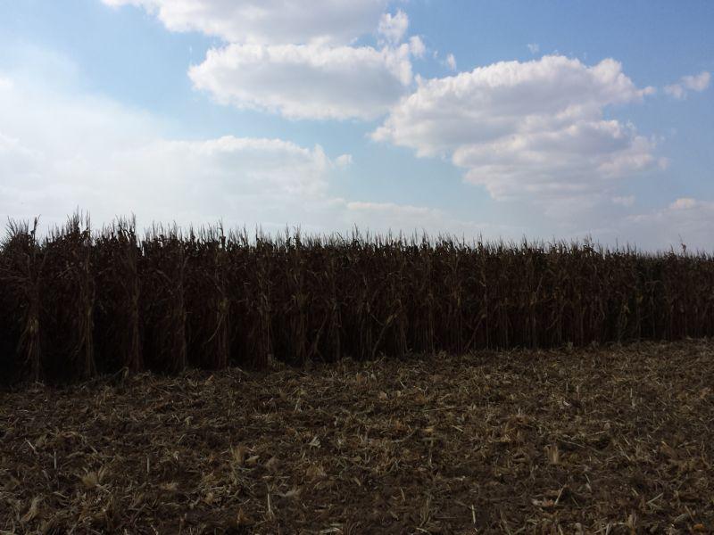 New Low Price-1,272Ac Row Crop : Wheatley : Saint Francis County : Arkansas