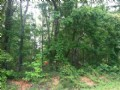 5.635 +/- Wooded Acres
