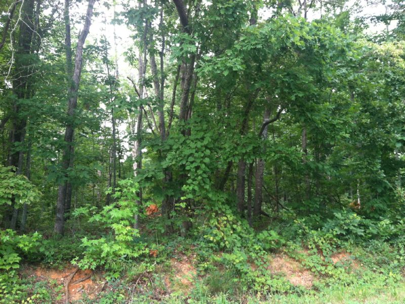 5.632 +/- Wooded Acres : Adairsville : Bartow County : Georgia