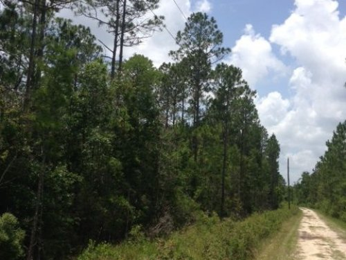 Nice Timber & Recreational Tract : Nahunta : Brantley County : Georgia