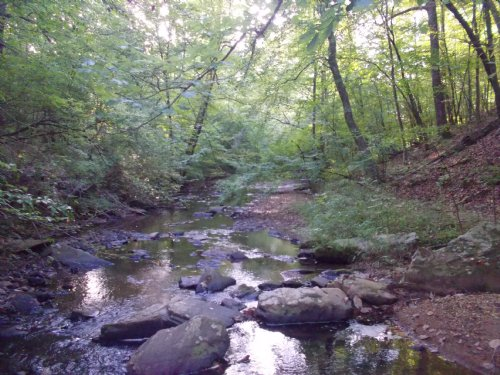 260 Acres - Hunting/timber : Equality : Coosa County : Alabama