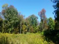 Woodlands Bordering State Forest