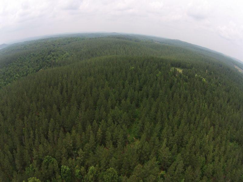 Record Buck Tract 69 Acres : Cedartown : Polk County : Georgia