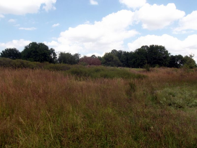 560  Acres * Excellent Cattle Farm : Manchester : Grant County : Oklahoma