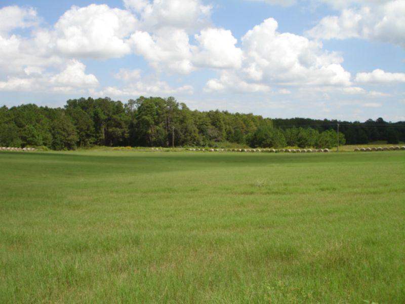 30 Acres Of Farmland : Bridgeboro : Worth County : Georgia