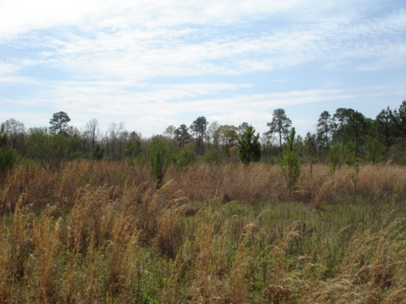 5 Acres Residential Lot : Sylvester : Worth County : Georgia