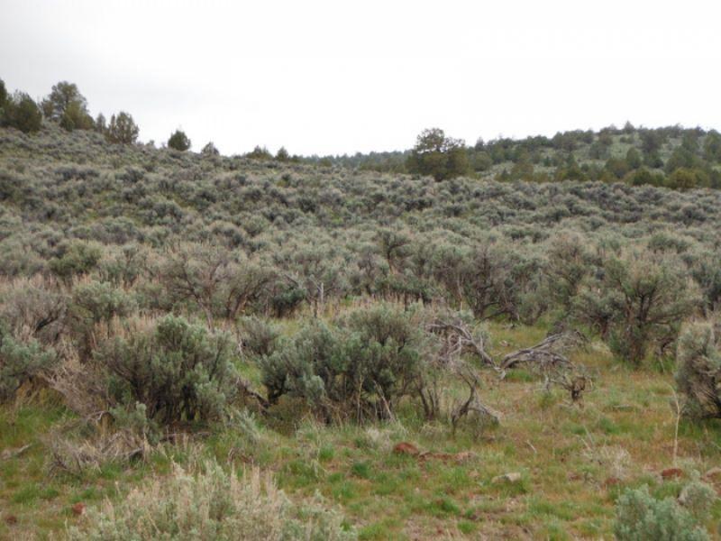 20.56 Acres Moon Valley Ranch.terms : Madeline : Lassen County : California