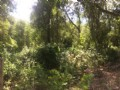 11.4 Acres Tract For Sumter County