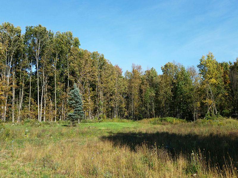Owner Financing Land Salmon River : Richland : Oswego County : New York