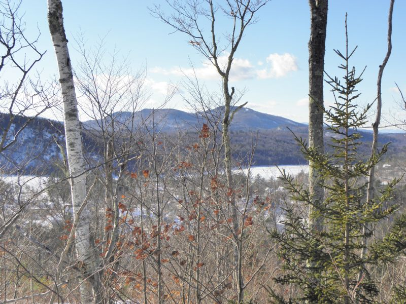 Fuller Hill Forest : Bryant Pond : Oxford County : Maine