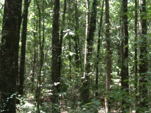 167.5 +/- Ac In Shiloh Community : Banks : Pike County : Alabama