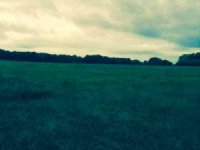 79 Acres Of Hunting Land