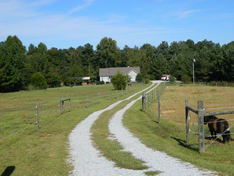 Mini Horse Farm/ Country Cottage : Lexington : Oglethorpe County : Georgia
