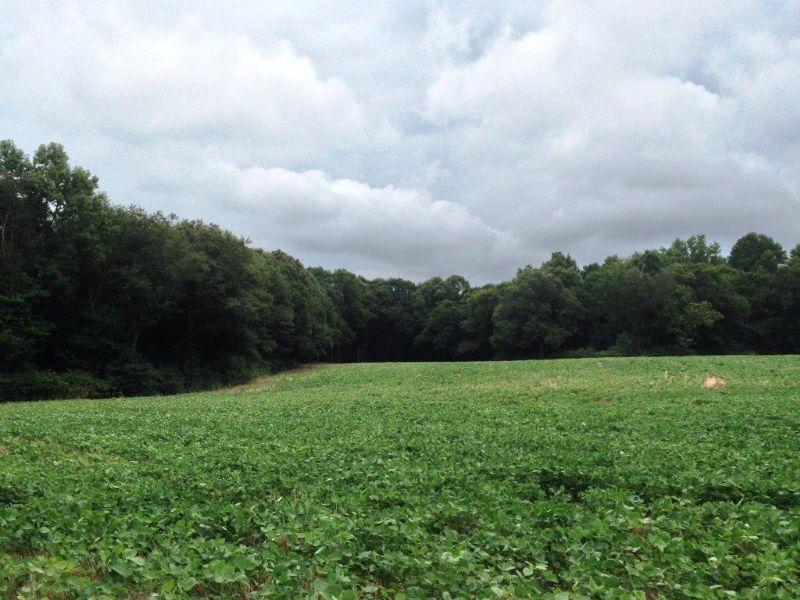 Harrison Bridge Farm : Carnesville : Franklin County : Georgia