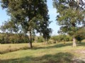 Beautiful Acreage With Trees