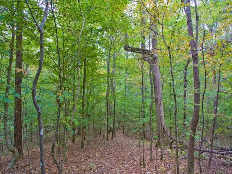 45 Wooded Acres - Turkey & Creek : Springville : Saint Clair County : Alabama