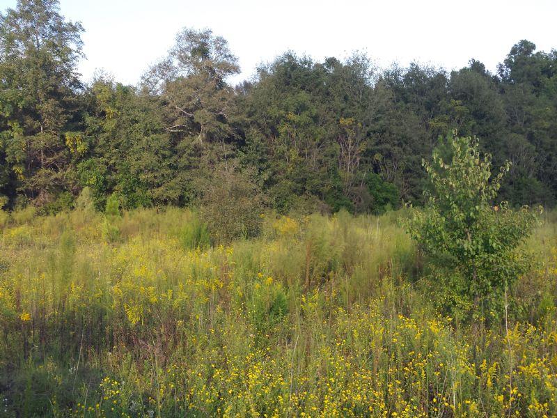 Cliponreka Hill : Statesboro : Bulloch County : Georgia