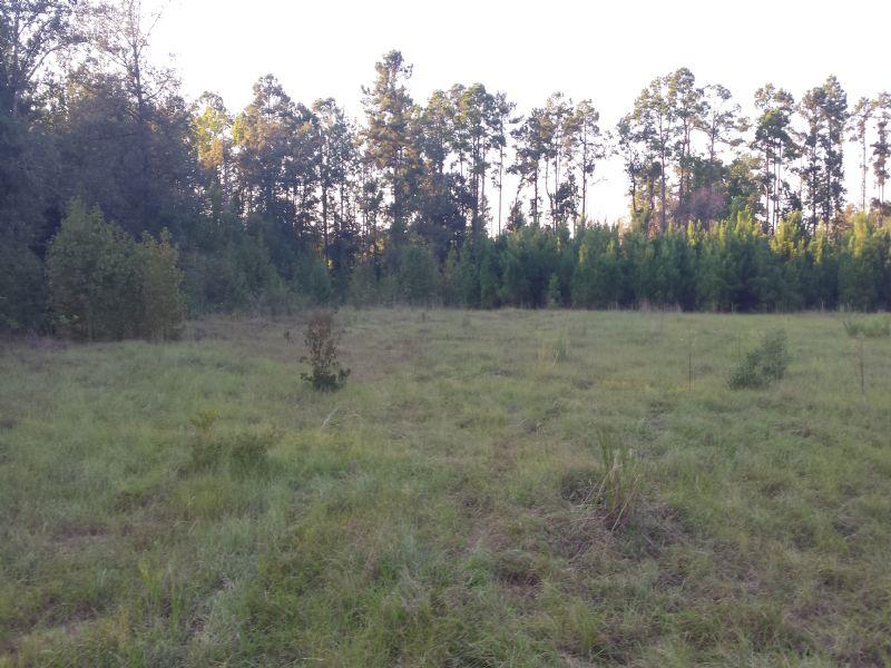 Carlton Oaks : Millen : Jenkins County : Georgia