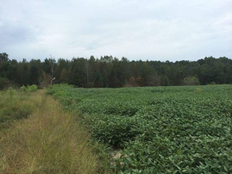 50 Acres Of Farmland, No Minimum : Lillington : Harnett County : North Carolina
