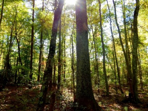 19.48 Acres W/ Mixed Timber : Ruther Glen : Caroline County : Virginia