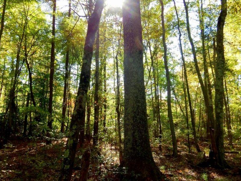 19.48 Acres W/ Mixed Timber : Ruther Glen : Caroline County : Virginia