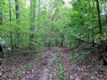 45 Acres W/tall Timber And Creek