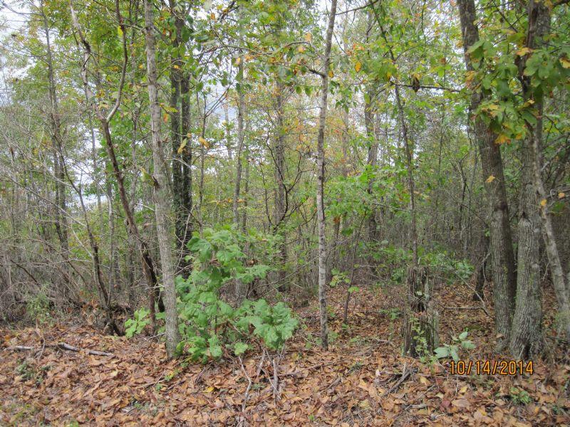 Multiple Recreation Opportunity : Waynesboro : Wayne County : Tennessee