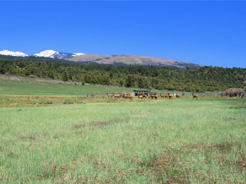 Baldwin Ranch : Mancos : Montezuma County : Colorado