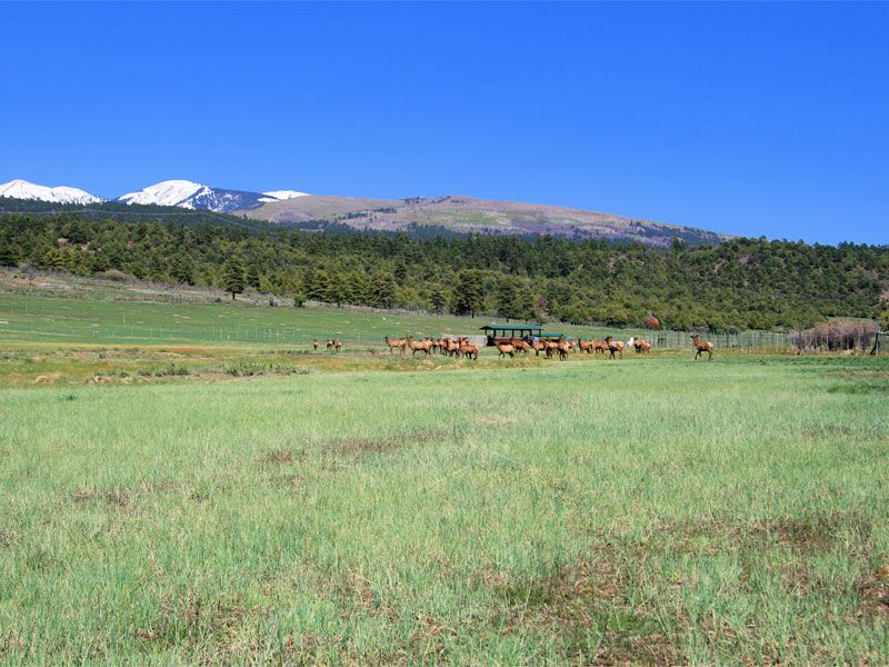 Baldwin Ranch : Mancos : Montezuma County : Colorado