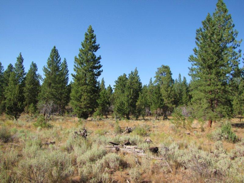 Silvies River Ranch : Burns : Harney County : Oregon