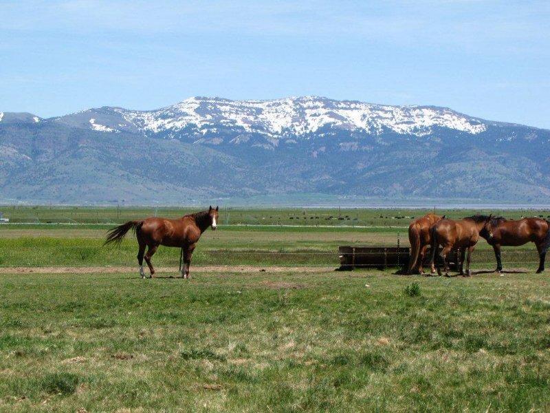 Goose Lake Heaven Cattle Ranch : Lakeview : Lake County : Oregon