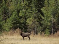 Whiskey Creek Hunting Grounds : Wallowa : Wallowa County : Oregon