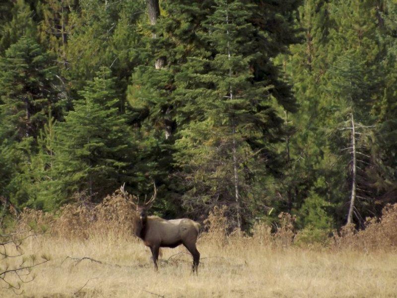 Whiskey Creek Hunting Grounds : Wallowa : Wallowa County : Oregon