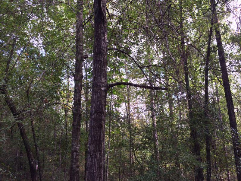 Mill Creek Tract : Century : Escambia County : Florida