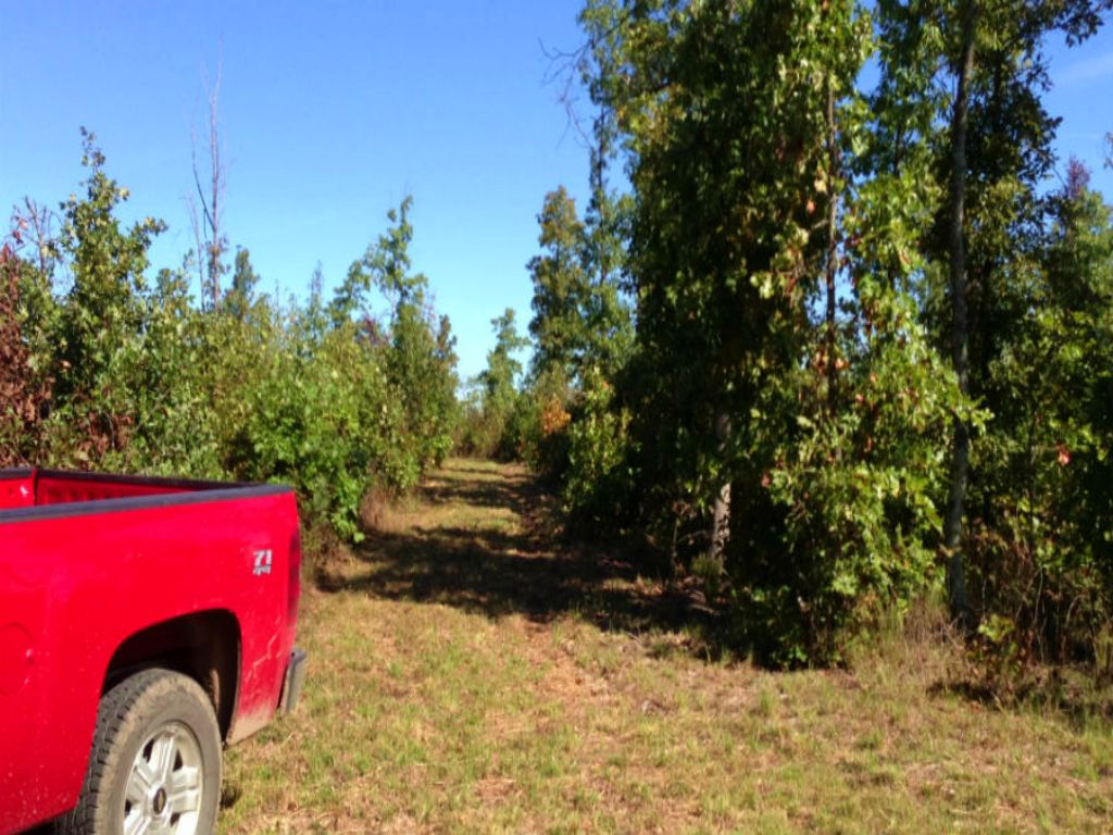 $500 Down, Private Hunting, Fishing : Winona : Shannon County : Missouri