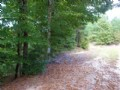 100+/- Acres Of Timberland