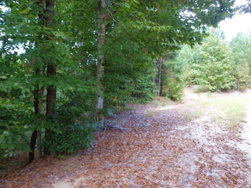 100+/- Acres Of Timberland : Columbia : Caldwell Parish : Louisiana