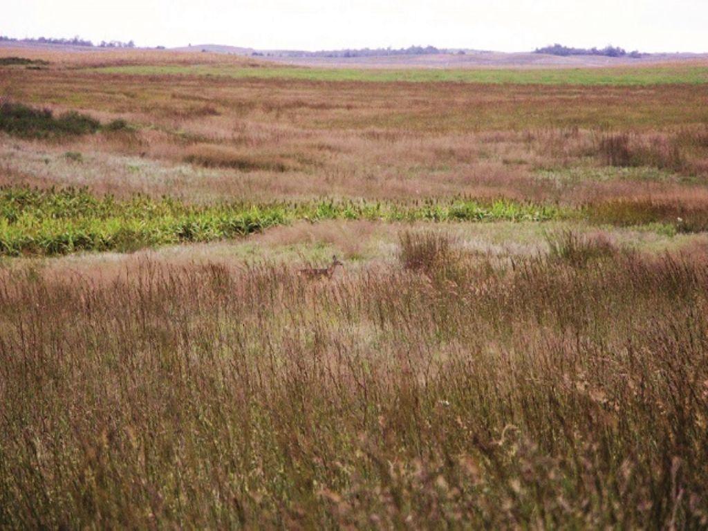 Spectacular 320± Acre Hunting Land : Haviland : Kiowa County : Kansas