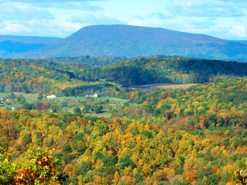 Absolute: 383.103 Wooded Acres On S : Fairfield : Rockbridge County : Virginia