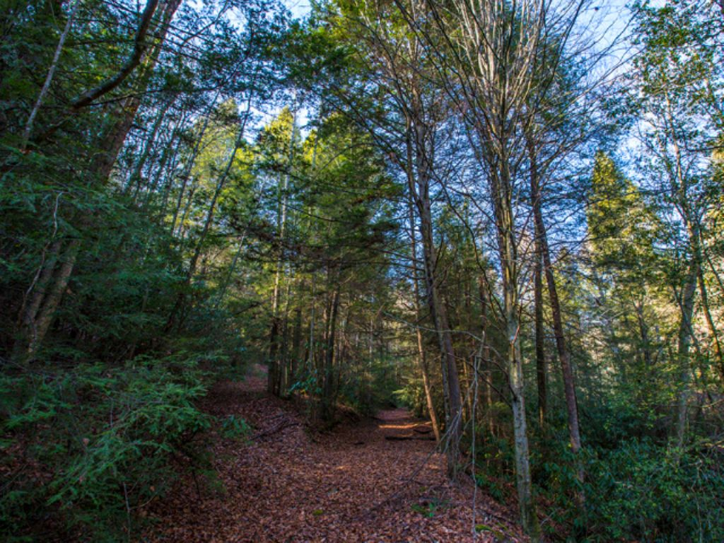 Perfect Land To Build A Cabin : Grandview : Rhea County : Tennessee