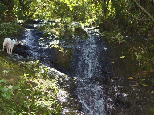 59 Acre Cattle Farm With Waterfalls : La Suiza De Turrialba : Costa Rica