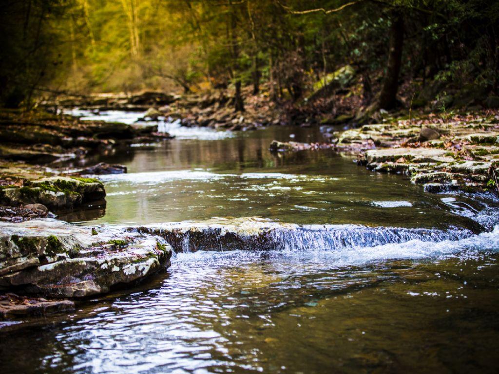 Creek Front & Mountain Views : Grandview : Rhea County : Tennessee