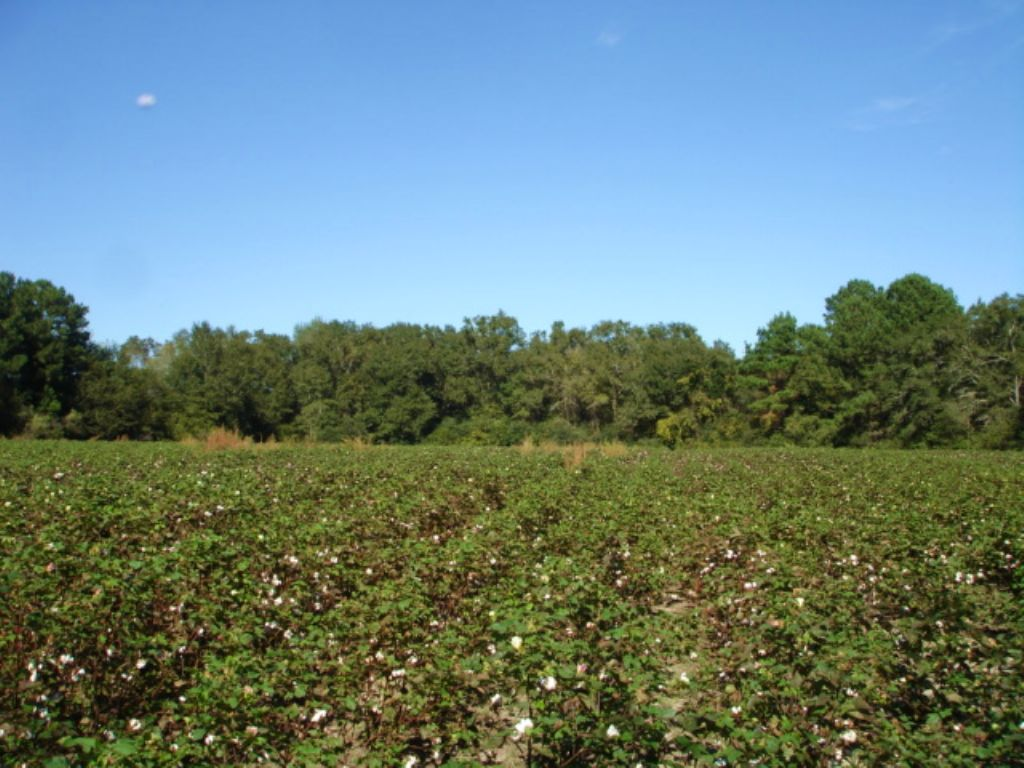 16 Acres On Old Adel Road : Moultrie : Colquitt County : Georgia